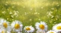Šliktinės vasaros šventė